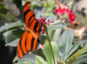 Butterfly Farm - Accommodation Gold Coast