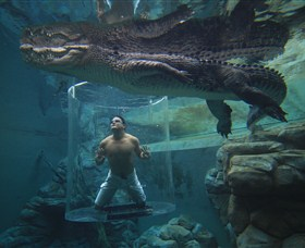 Crocosaurus Cove - Accommodation Gold Coast