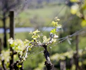 Norton Estate Wines - Accommodation Gold Coast