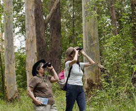 Chichester State Forest - Accommodation Gold Coast