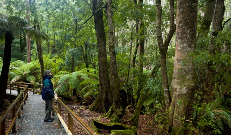 Monga National Park - Accommodation Gold Coast
