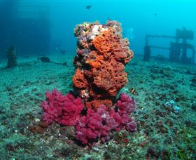 HMAS Brisbane Dive Site