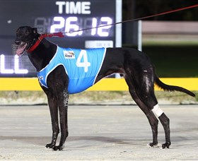Bulli Greyhound Racing Club